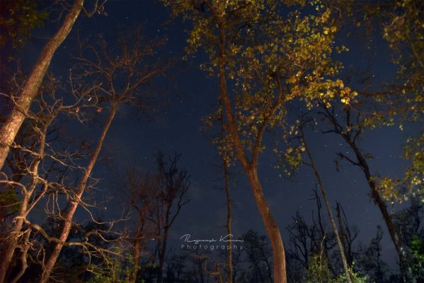 Stary Night - Rajneesh Kumar Photography, Nature Photography